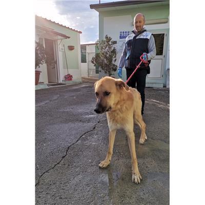 COMUNE DI CROTONE - 380260101650367