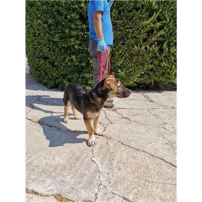 COMUNE DI CROTONE - 380260101920136